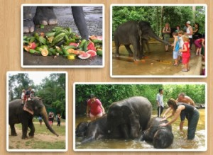 Permalink to:Tour 14 : The Elephant Sanctuary